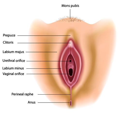 Labia Monora Reduction : Labiaplasty
